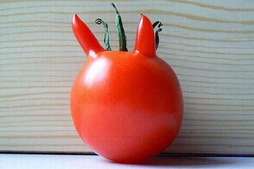 Pomidorowy diabeł