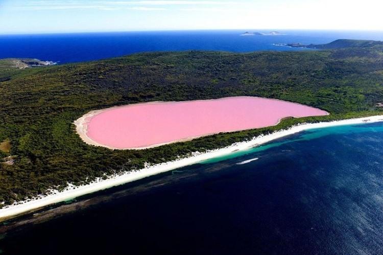 różowe Jezioro Australia Hillier