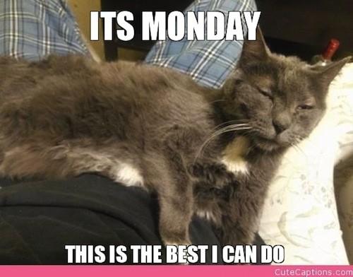 Poniedziałek zdjecie