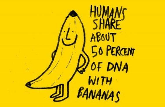 banan i ludzkie DNA