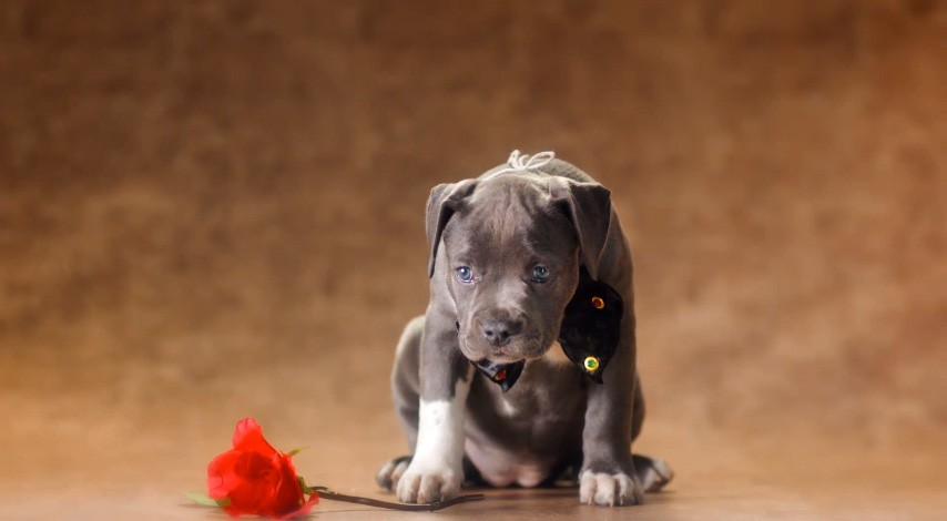 Pedigree share for dogs