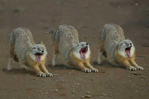 Zabawne zdjęcia zwierząt