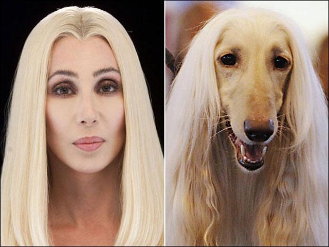 Zwierzęta podobne do celebrytów