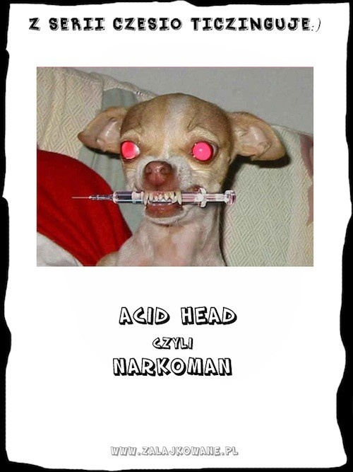 acid head - narkoman