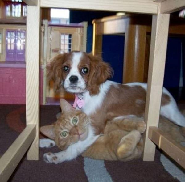 Co robią psy gdy są same - śmieszne zdjęcia