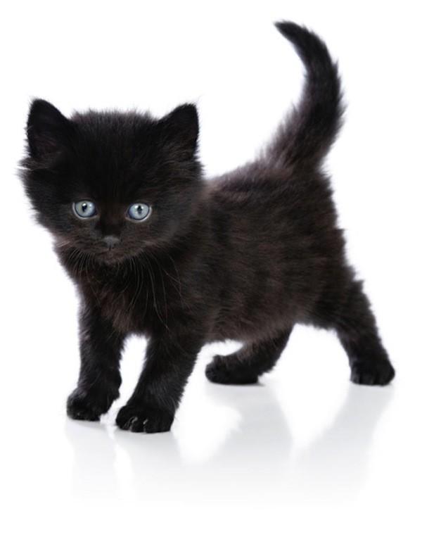czarny kot fakt