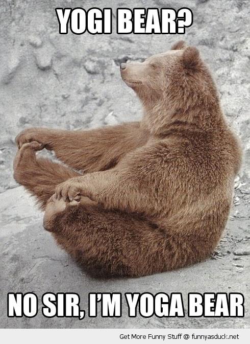 funny-yoga-yogi-bear-pics