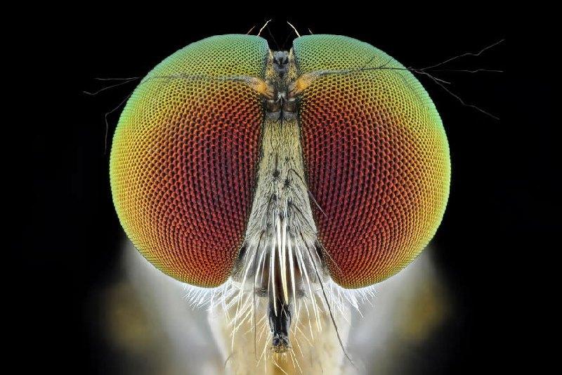 Makro zdjęcia owadów i robaków