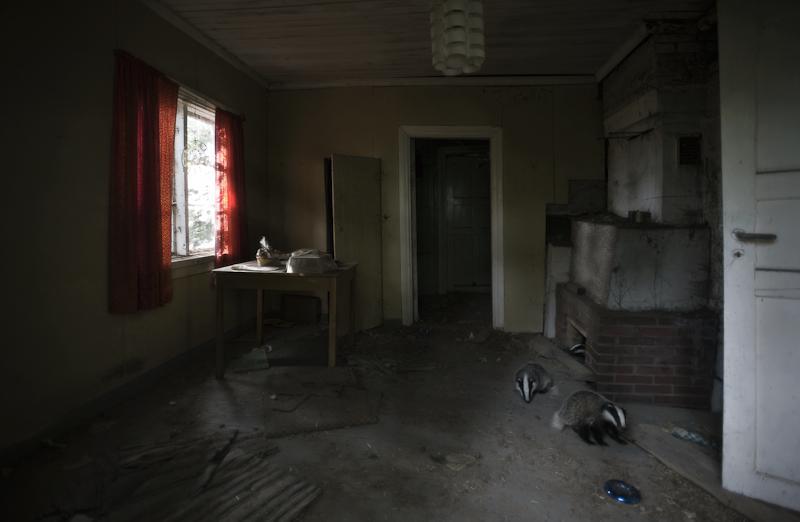 Opuszczony dom przejęty przez zwierzęta