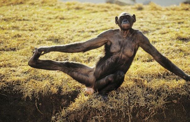 smieszne-zwierzeta-cwicza-joge-18
