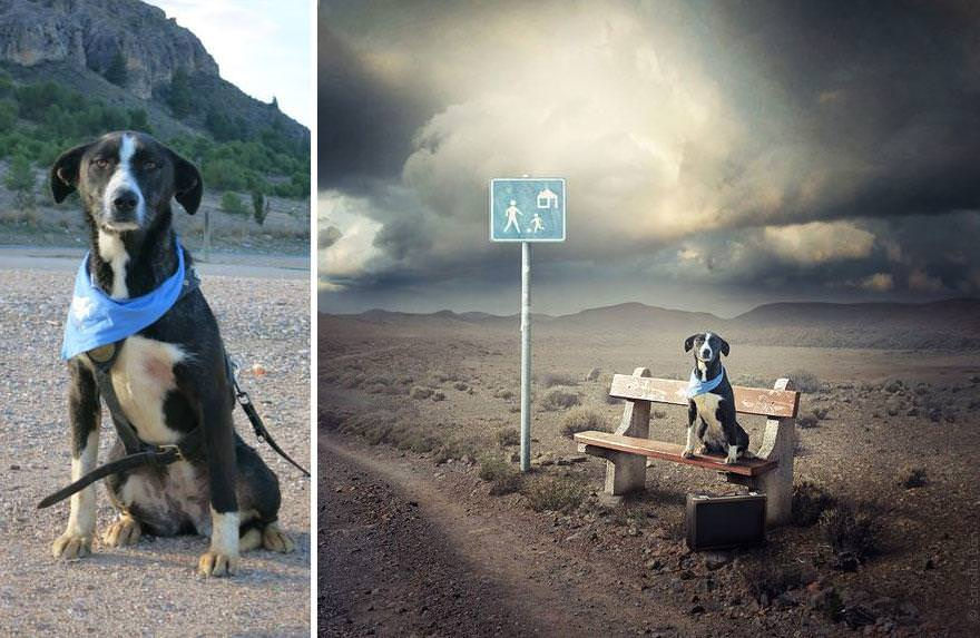surrealistyczne fotografie psów