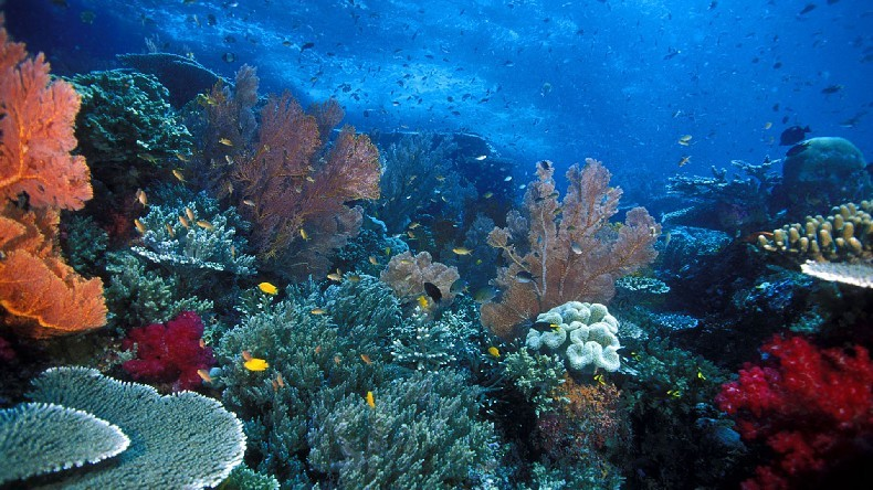 Wyspy Raja Ampat