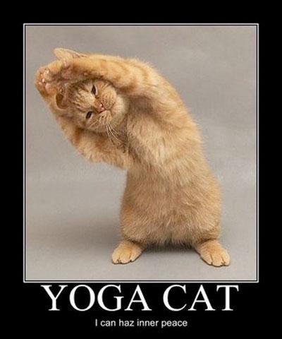 yoga-cat-funny
