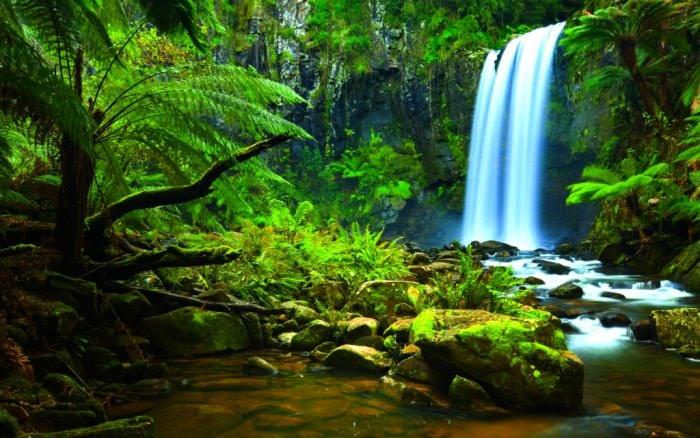 Brazylia lasy deszczowe