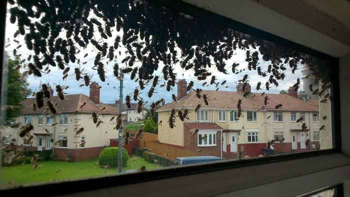 atak pszczół anglia
