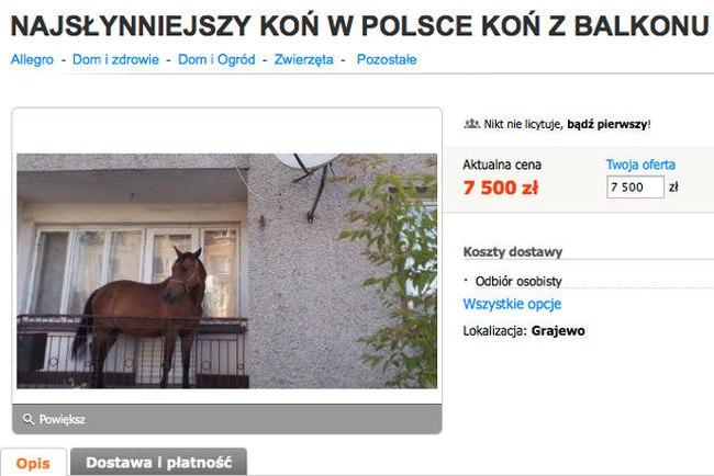 Balkoń - koń na balkonie