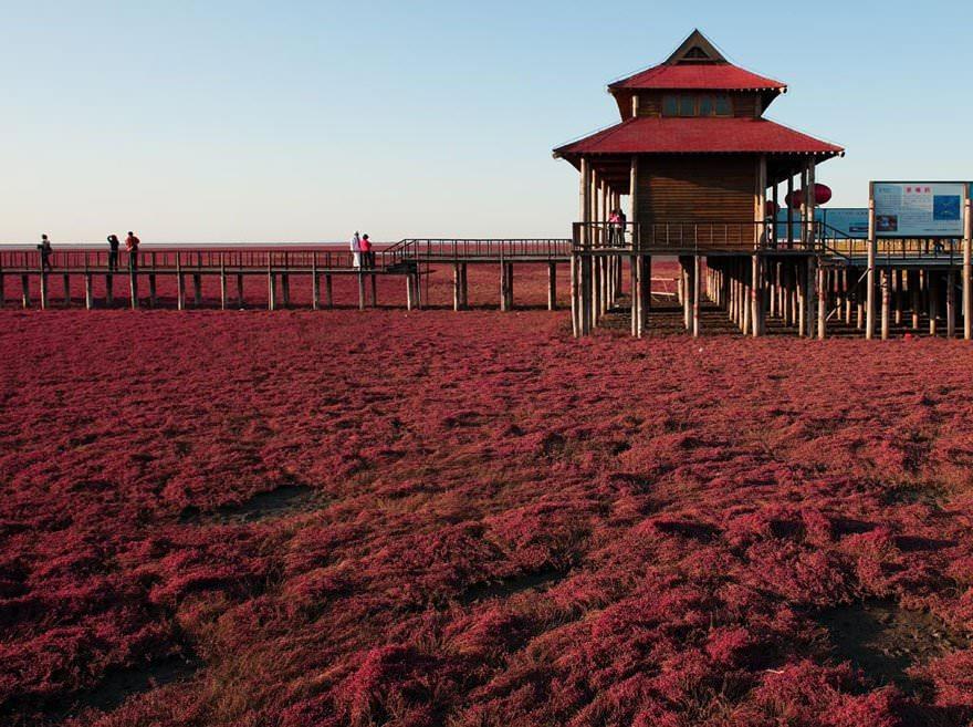Czerwona Plaża Panjin Chiny