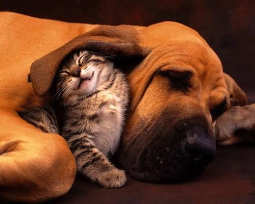 rozkoszne-spiace-zwierzaki