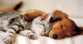 spiace zwierzeta