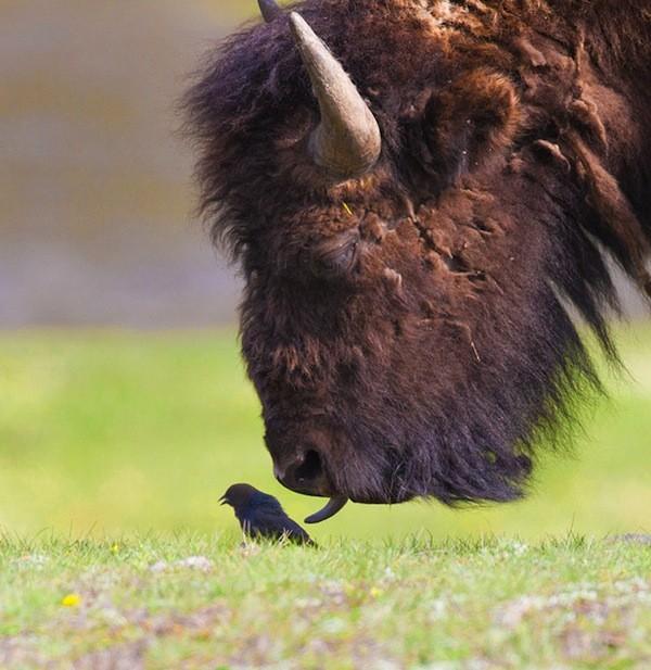 zwierzatka i ich jezyki