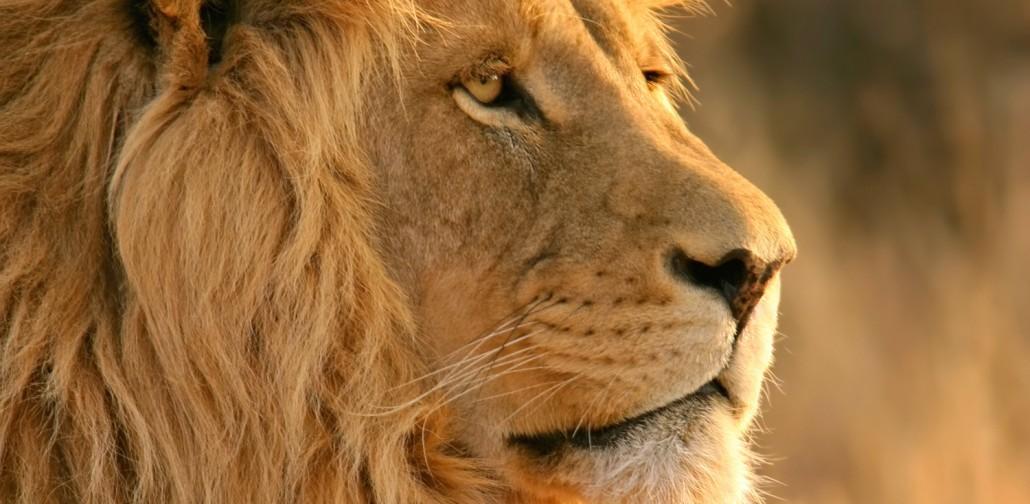 najgorniejsze zwierzeta lew