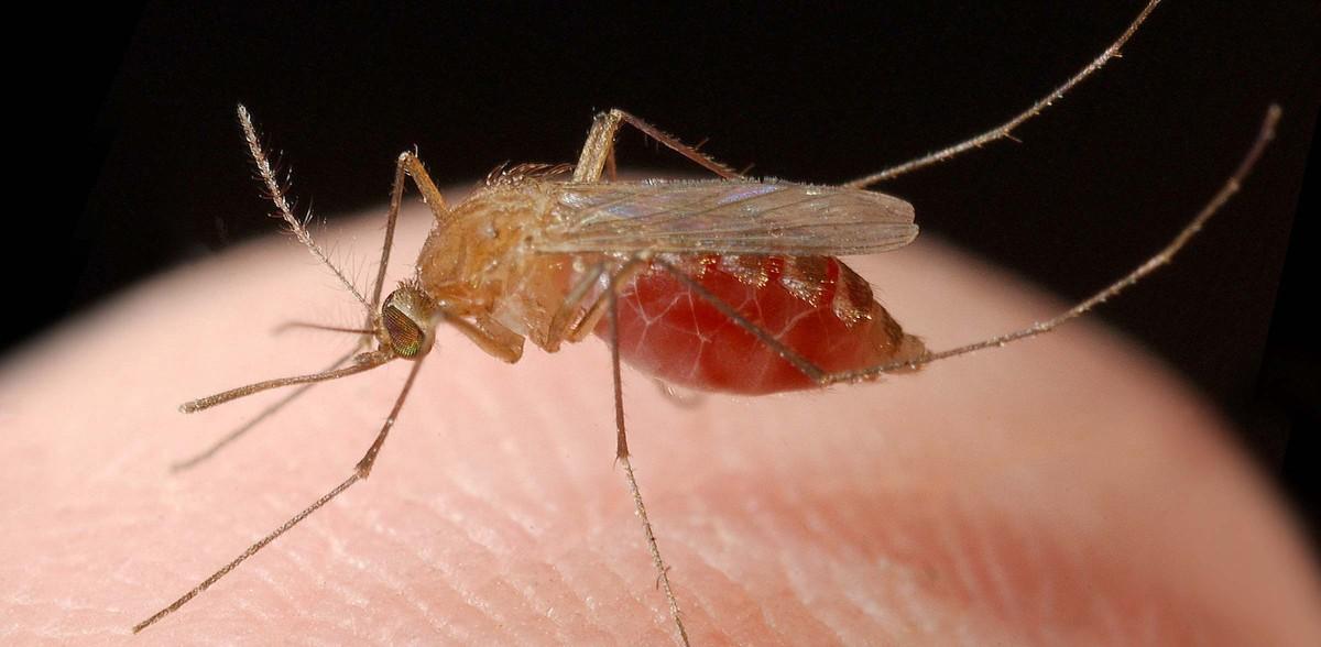 najgorniejsze zwierzeta moskity