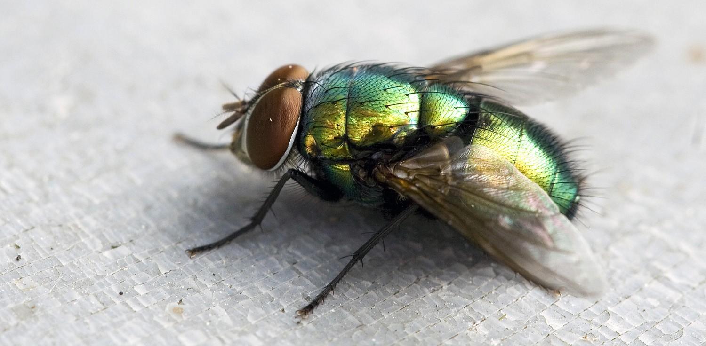 najgorniejsze zwierzeta muchy