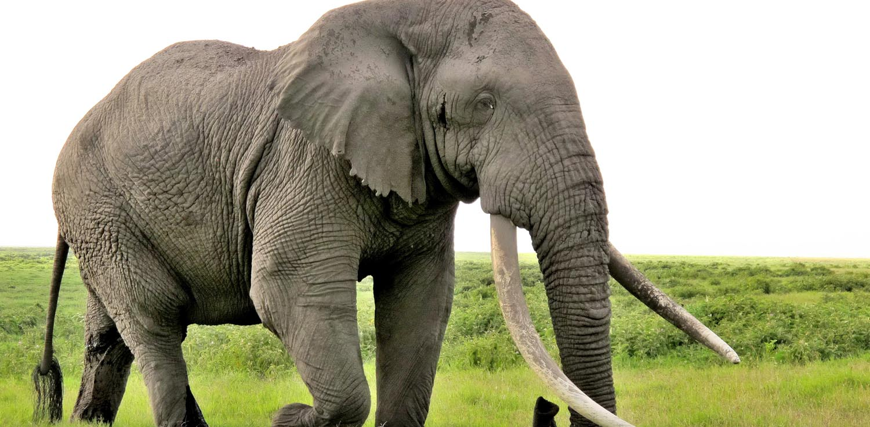 najgorniejsze zwierzeta slon