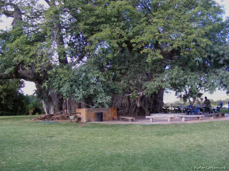 sunland-baobab-bar-w-drzewie-10