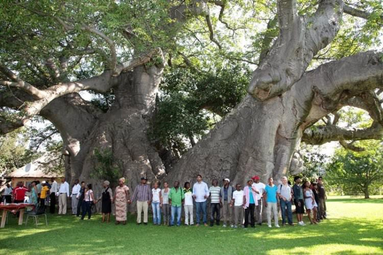 sunland-baobab-bar-w-drzewie-4