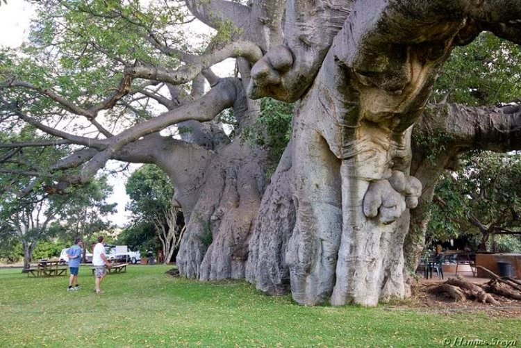 sunland-baobab-bar-w-drzewie-6