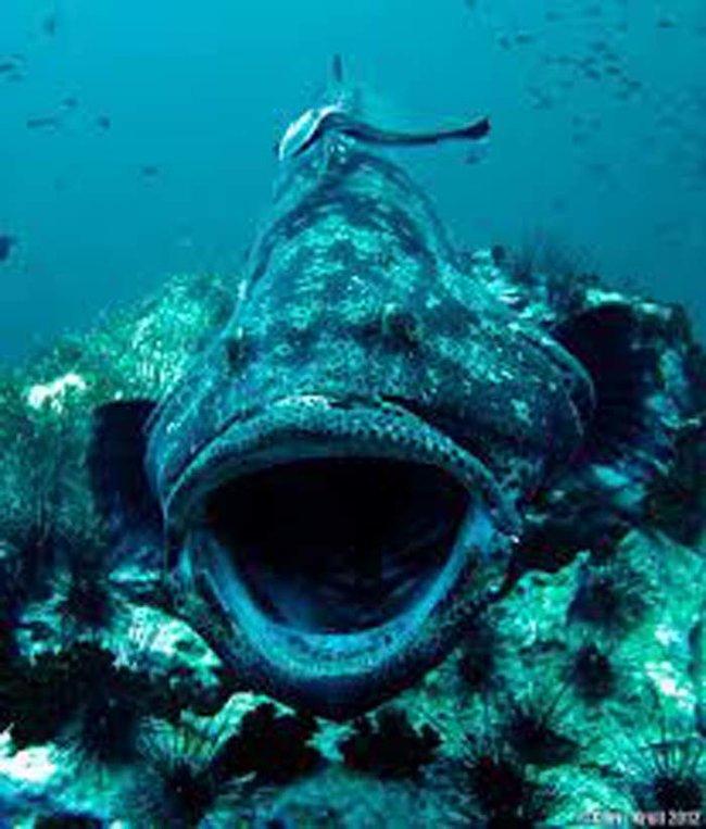 zjedzony-rekin-2