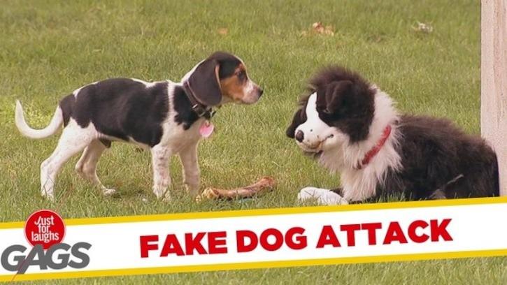 atak pluszowego psa