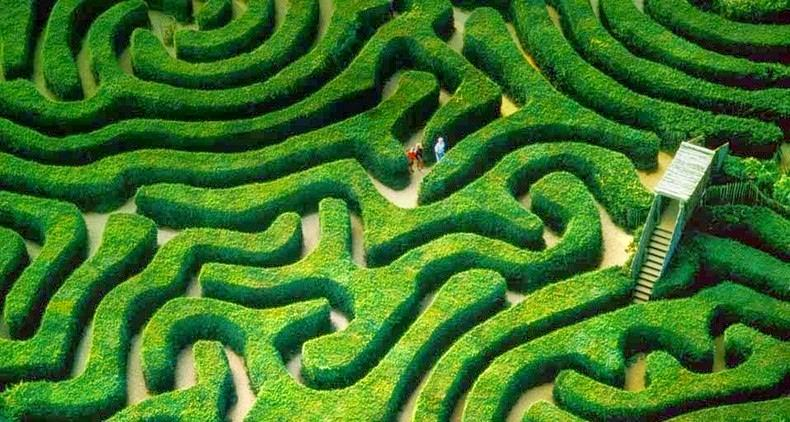 longleat-hedge-labirynt-3