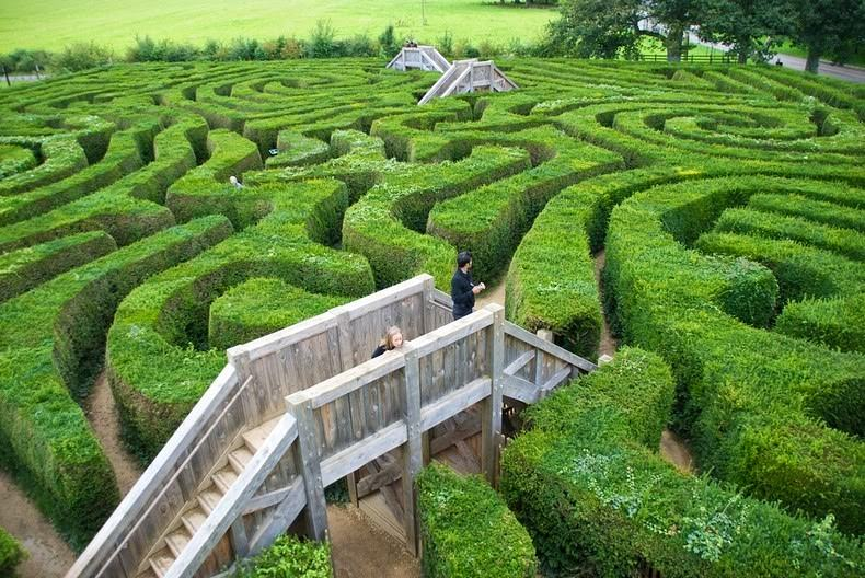 longleat-hedge-labirynt-4