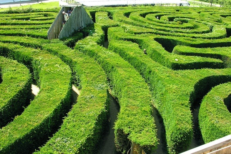 longleat-hedge-labirynt-6