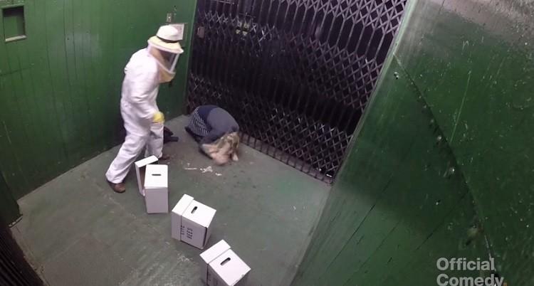 pszczoly-zart-winda