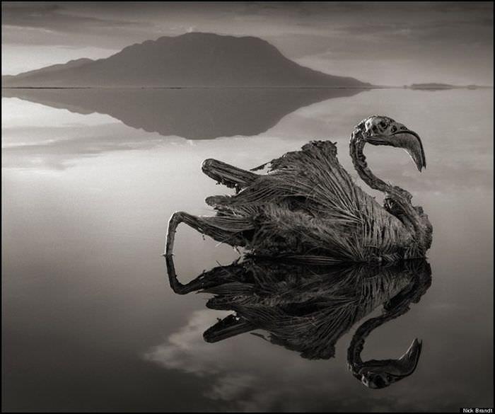 jezioro-natron-8