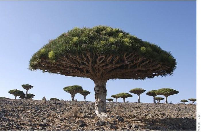 sokotra_jemen