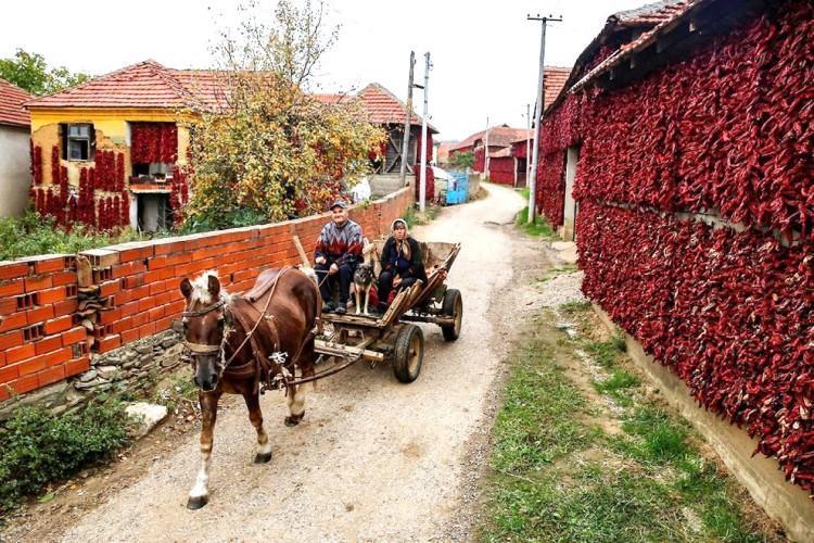 Donja Lokosnica, Serbia