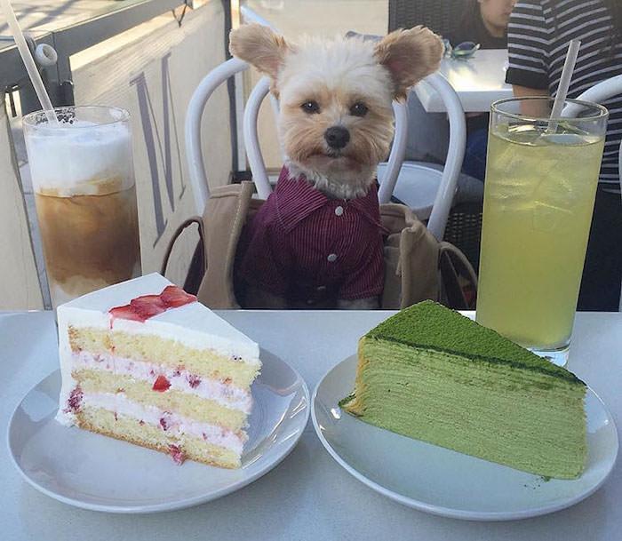 Popey the foodie Dog - najpopularniejszy pies na Instagramie