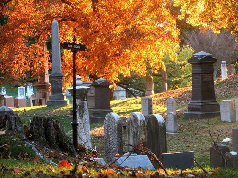 Miód z cmentarza