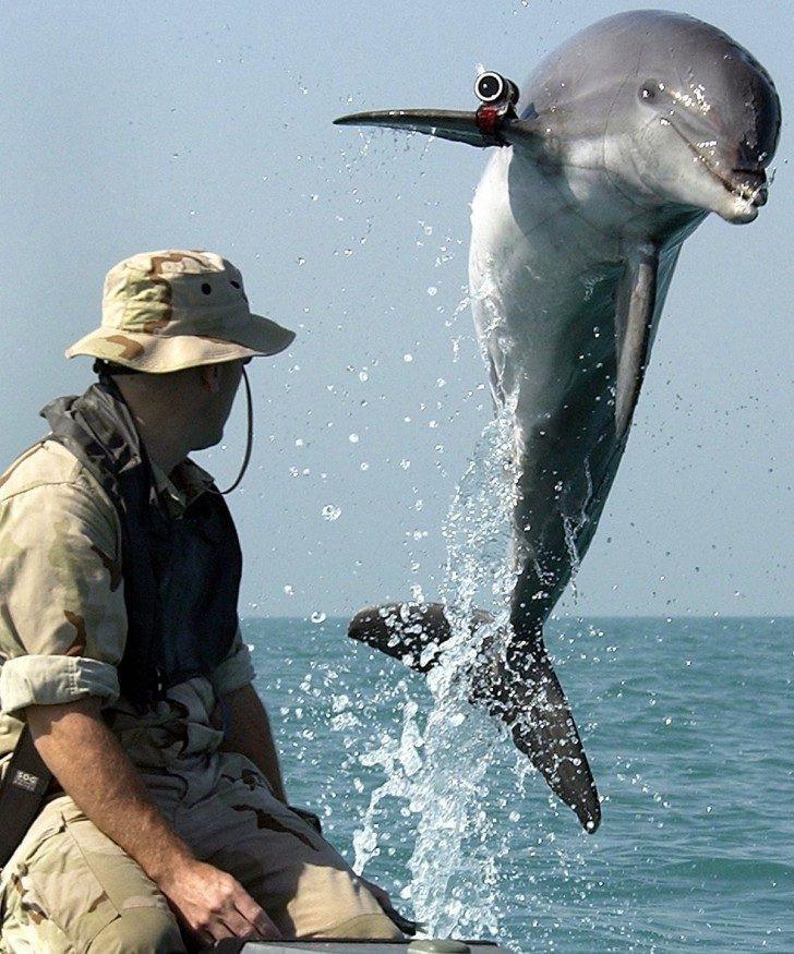 Żołnierze delfiny USA