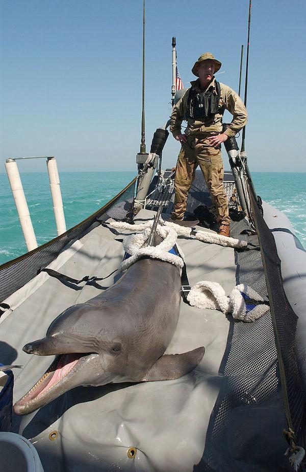 Żołnierze delfiny