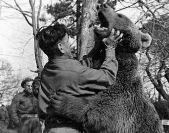 Niedźwiedź wojtek żołnierz