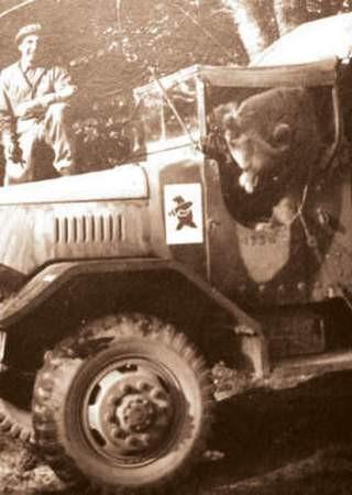 Niedźwiedź wojtek w samochodzie