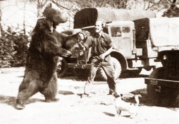 Niedźwiedź wojtek wojsko