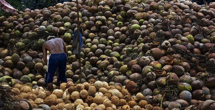 paliwo kokosowe