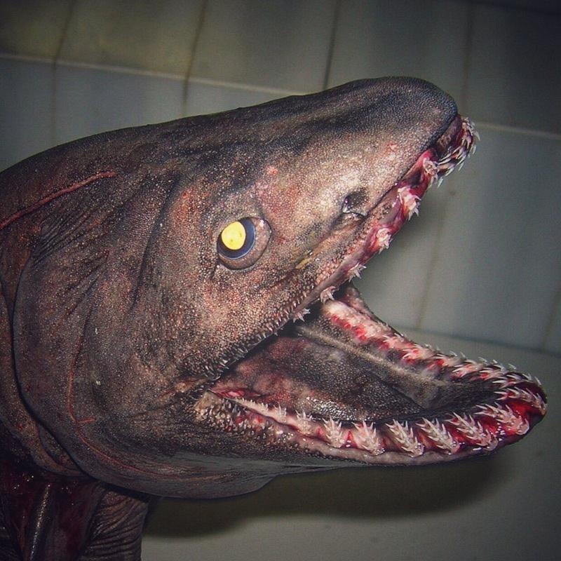 Roman Fedortsov potwory z głębin