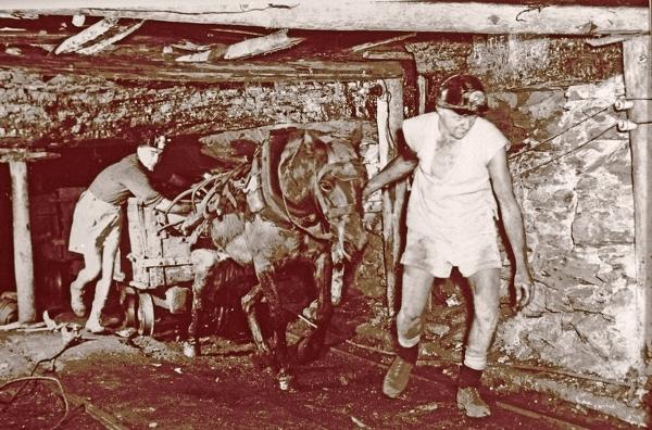 Kuce górnicy